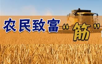 农民致富创业风潮