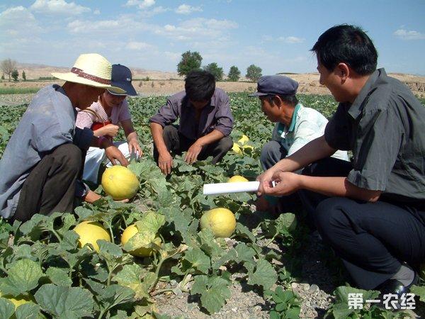 大庆农产业化水平攀升 亿元企业40家