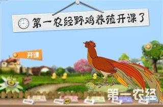 【养野鸡专题】野鸡/山鸡养殖技术|视频|成本