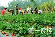 <b>天津各县区打造休闲农业精品</b>