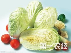 2015年04月29日最新大白菜市场批发价格行情