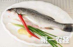 2015年5月12日最新鲈鱼批发市场价格行情