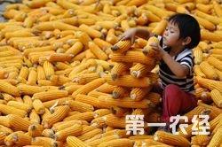 2015年5月15日锦州港玉米最新价格行情今日价