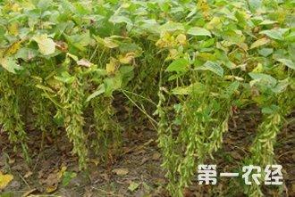 【大豆专题】大豆种植技术|病虫害防治