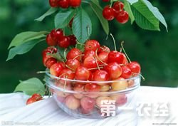 2015年6月17日最新樱桃市场批发行情分析