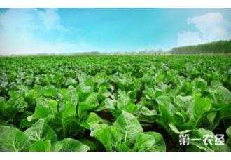 重庆季节蔬菜借助航空运力发往全国各地