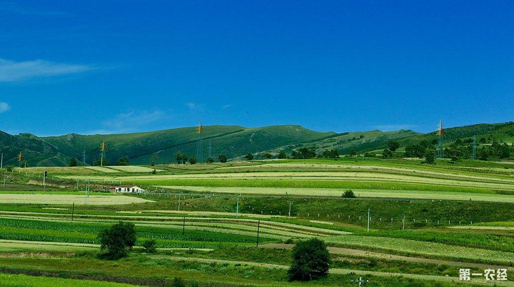内蒙古赤峰市:2016调整种养植结构