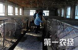 "<b>珲春市:吕景秀""养猪""带富众乡亲</b>"