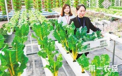 """江苏淮安引入""""立体栽培""""等农业科技创新项目"""