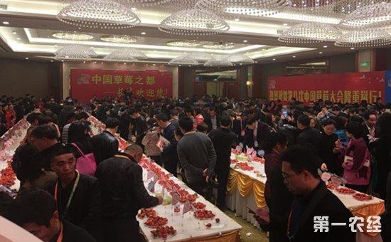 安徽合肥:第八次中国草莓大会召开