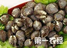 辽宁省特色美食:大连湾魁蚶