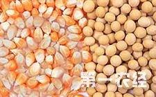 2017年种大豆和种玉米哪个更好呢?