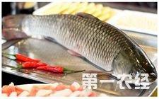 2017年草鱼市场能否逆转?科学规划是关键
