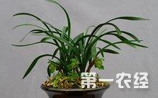 兰花种植技术:在盆土里撒点这个,怎么养都叶
