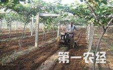 <b>眉县:猕猴桃果园专用施肥机助力农业发展</b>