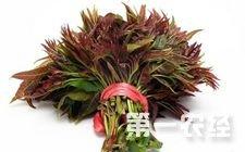 香椿菜多少钱一斤?