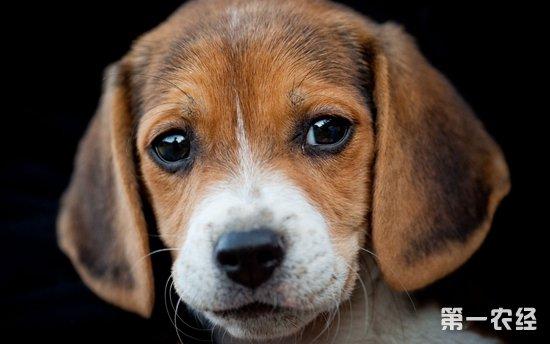 宠物狗吐白沫还拉稀,该吃什么药?