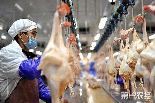 荆州市整改白条禽和牛羊肉屠宰问题得到落实