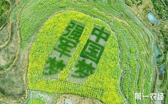 """江苏省助陈店村打造创意农业——""""稻米+休闲农业""""示范基地"""