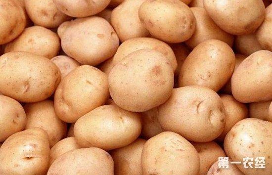 马铃薯:延续稳中偏弱态势