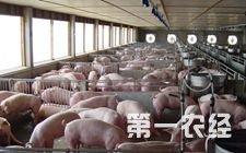 6月能繁母猪减少18万头 2017年或存在75万头左右的缺口