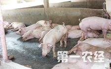今年二季度吉林省生猪价格下降幅度明显