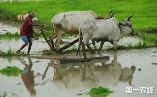 2017印度家禽畜牧展将于8月份举行,助推我国开发南亚市场