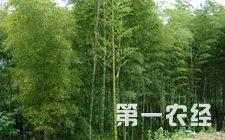 """三江侗族自治县发展毛竹产业 就像山上""""存了钱"""""""