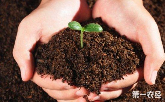 国产种子品种仍处主导地位 洋种子销售份额仅占3.2%