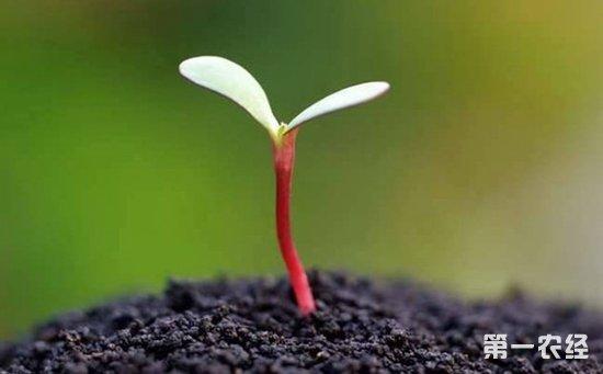 国产种子替代外来种子愿景已基本实现 将致力于走出国门