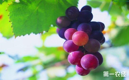 柳州:水果迎来销售旺季