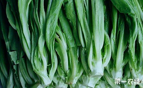 北京:菜价略有上涨 肉价普遍回落