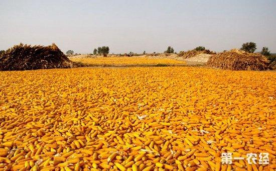 玉米价格后市承压下行