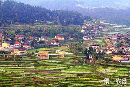 贵州丹寨:生态养鸡助脱贫 年收入将达300万元