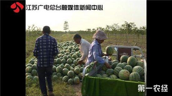 十万斤西瓜遭滞销 农户愁销路赚钱为儿治病(视频)