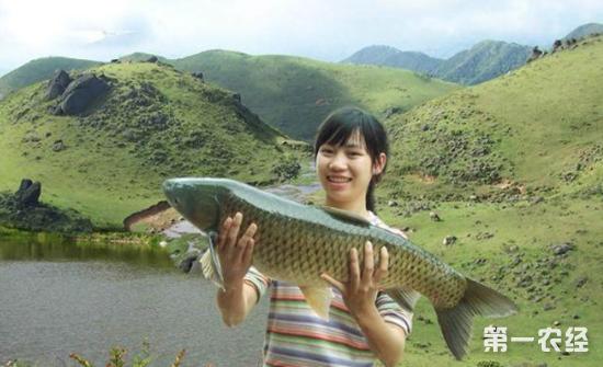 博白那林鱼多少钱一条?