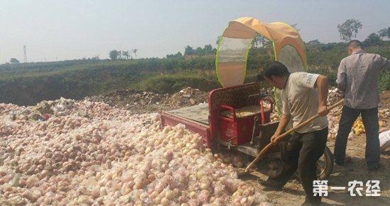 陕西扶风:桃子增产不增收 县农业局积极协调促销售