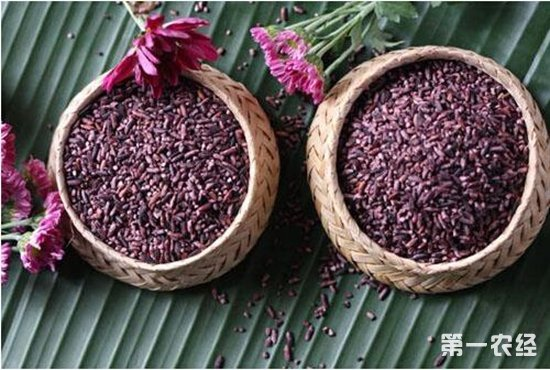 皇宫贡米胭脂稻多少钱一斤?