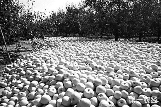 河南兰考:500万斤酥梨遭滞销 养老院经济支撑堪忧