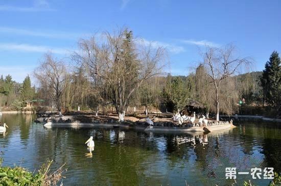 云南野生动物园收容一2公斤娃娃鱼