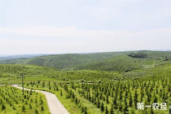 湖北长江生态大保护林业专项行动成果公开