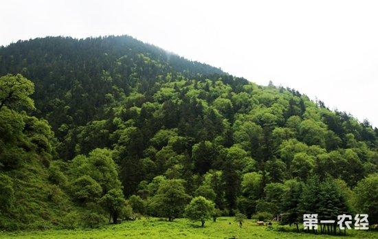 我国林业产业蓬勃发展 成世界上林业产业发展最快的国家