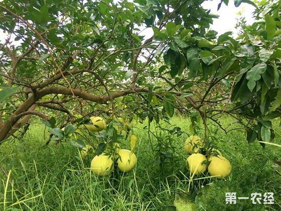 """重庆成现实版""""开心农场"""" 一根网线让全市前八月卖了58亿"""