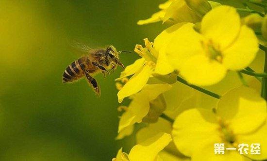 """养蜂达人韩建波:蜜蜂酿出""""甜蜜蜜""""致富梦"""