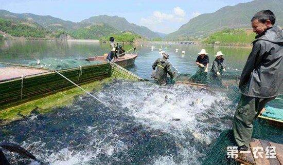 马维平:立体生态深水养鱼成就脱贫致富路