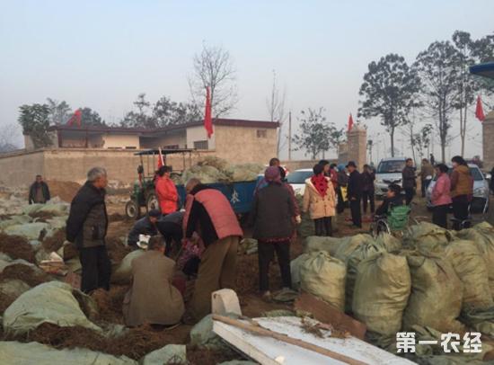 开封杞县:艾草产业成新兴绿色生态致富产业