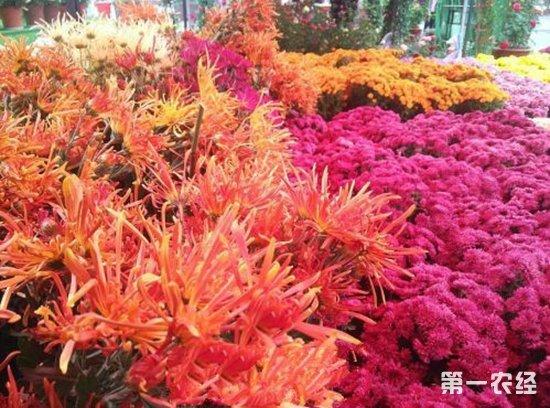 第11届金华·华东农交会今日开幕 首次举行特色花卉展示