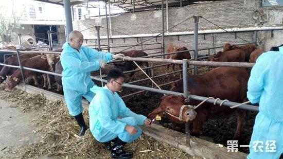"""恩阳""""六个强化""""确保畜牧业健康发展"""