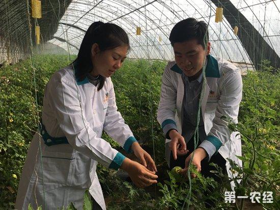 乐陵黄夹:大棚种植果蔬助农增收