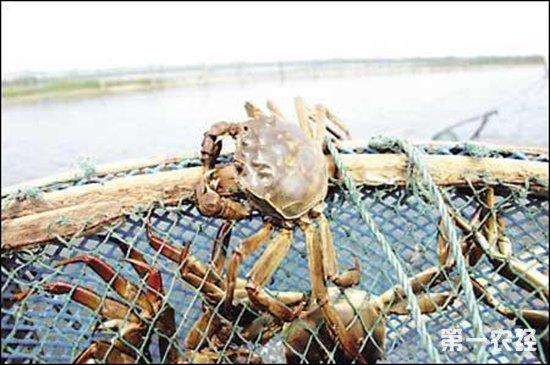 科技养殖助无为蟹农走上致富捷径